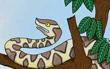 Illustrations du tome 2 des fables de Guyane
